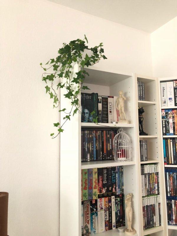 Mon nouveau chez moi
