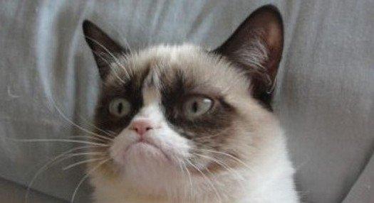 Grumpy Tom !