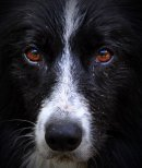 Photo de ApacheMaBorderCollie