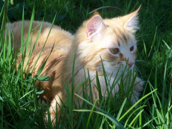 Ce chat est trop chou non? Il s'appelle filou ;)!