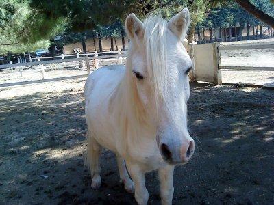 On m'a offert le poney des rois ...