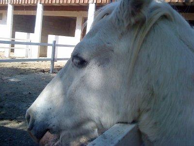 (l) jtm comme si tu étais mon poney        (l)