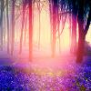 La féerie est un monde vivant que l'imagination de l'enfant est seule capable de créer à sa démesure.
