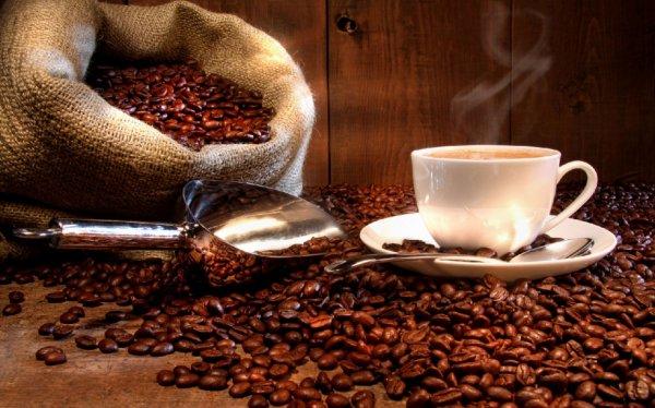 Le coin Phyto :  Le Café