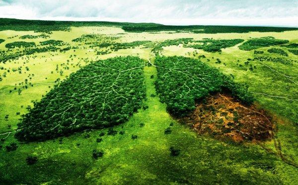 """""""  Lorsque  l'homme aura coupé le dernier arbre, pollué la dernière goutte d'eau, tué le dernier animal et pêché le dernier poisson, alors il se rendra compte que l'argent n'est pas comestible. """""""