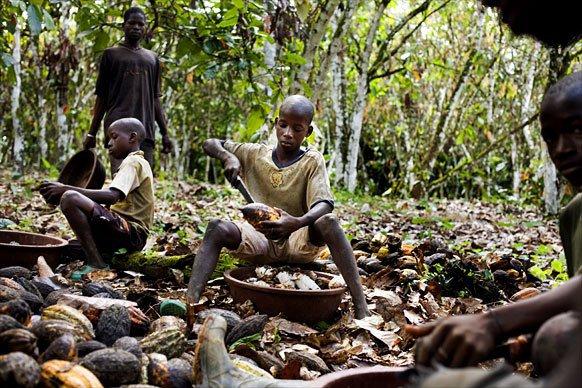 Boycotter le chocolat  :  Les enfants esclaves du cacao en Afrique occidentale