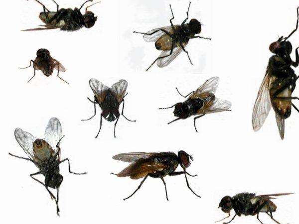 Comment tenir à distance les mouches,  araignées, moustiques, mites…  à l'aide des huiles essentielles