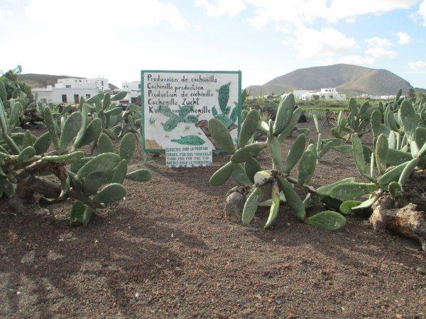 pour Elena qui aime les plantes grasses  à Lanzarote; elle pourrais faire sont choix