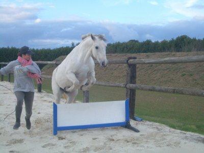 Audrey Gory équitation éthologique à votre service...