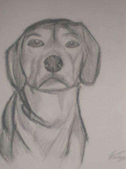 Portrait de mon chien :)