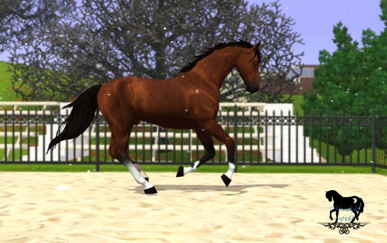 Présentation des chevaux/Mâles