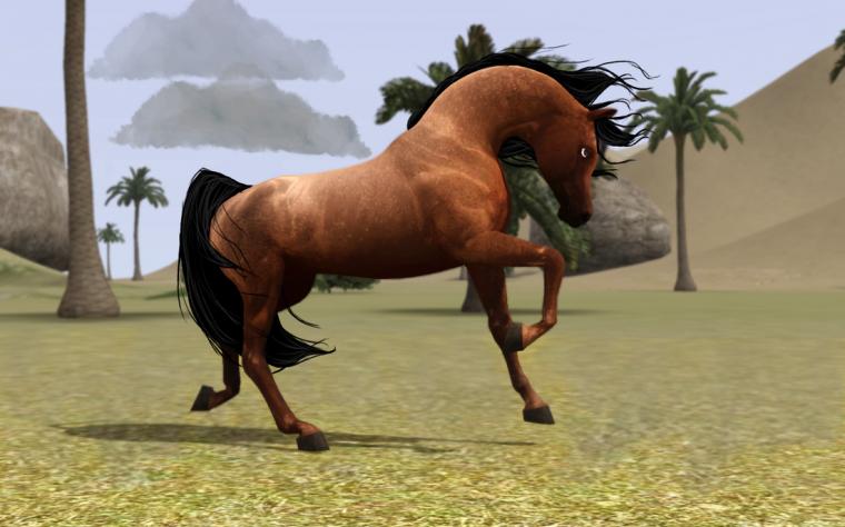 Présentation des chevaux/Femelles