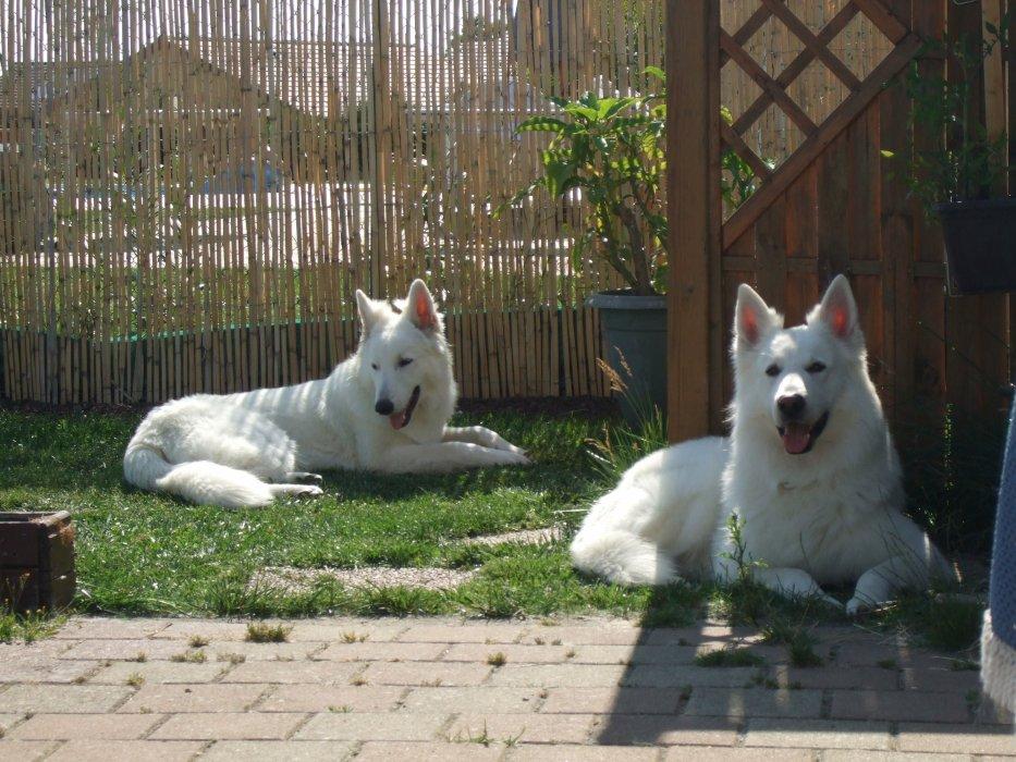 Nos chiens, Balco et First