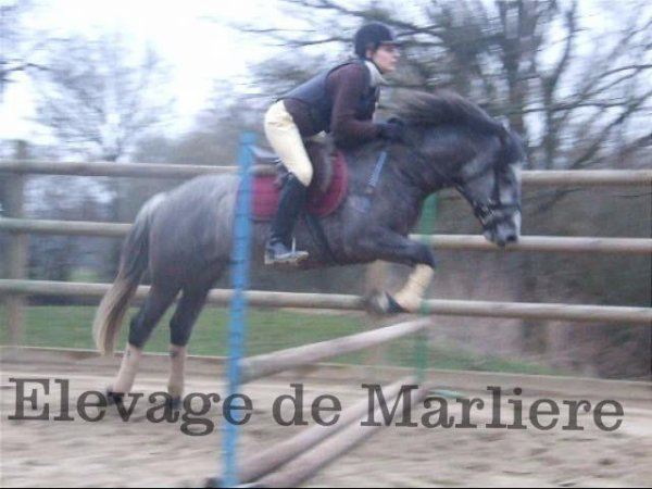 Unteur de Marlière  première séance de saut
