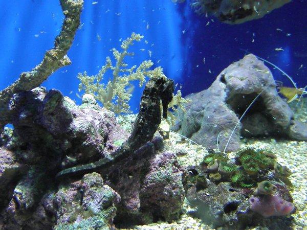 Musée océanographique de Monaco / 3