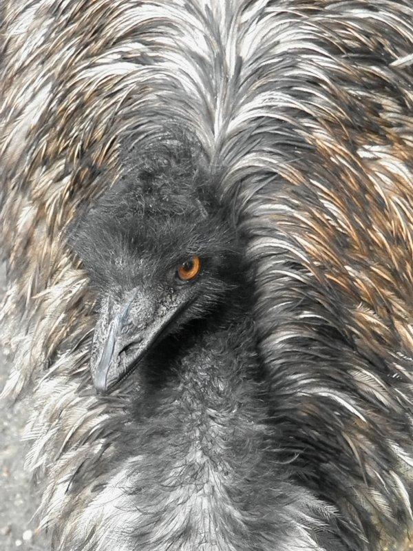 Portrait d'animaux