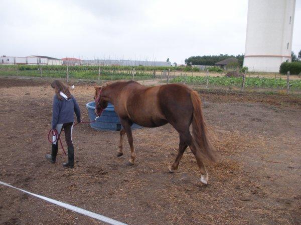 Légende II Centre Equestre Du Bois Brulé # Centre Équestre Du Bois Brulé