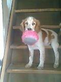 Mon chien Patto