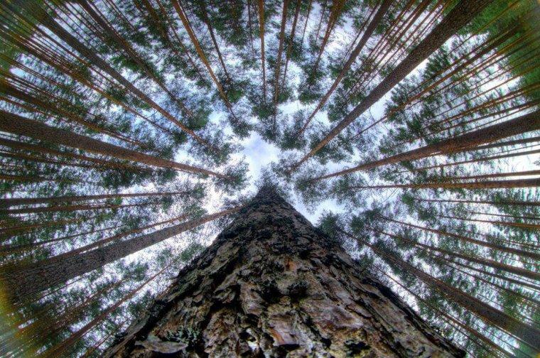 L'équilibre sacré : Redécouvrir sa place dans la nature  - David Suzuki