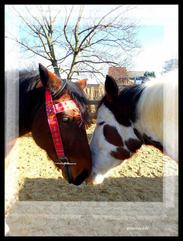 mes amour de chevaux