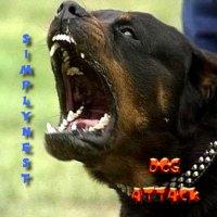 simplynwest / dog attack (2009)