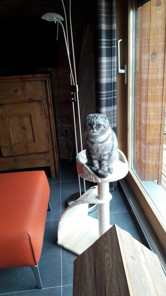 Gros chat sur petit arbre...