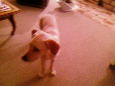 ma chien samara <3