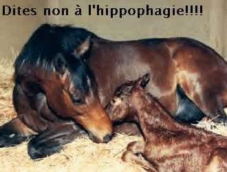 Lutte contre l'hippophagie