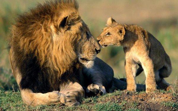 Louka Nee 5 Aout 2010 Signe Lion Papa Louka Nee Le 7 Aout !990 Jtaime Mon Gars Moi Et Toi Ses Fou Cquond Ce Resemble
