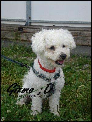 Gizmo, mon amour de chien. ♡