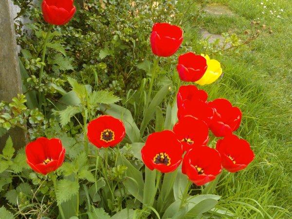 AVRIL : Quand le printemps revient