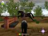 Horses57