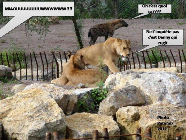 DANNY LE LION HUMO