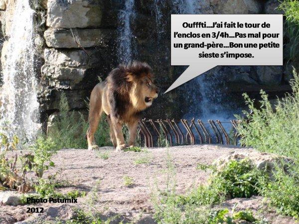LION HUMO