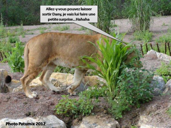 LIONNE HUMO