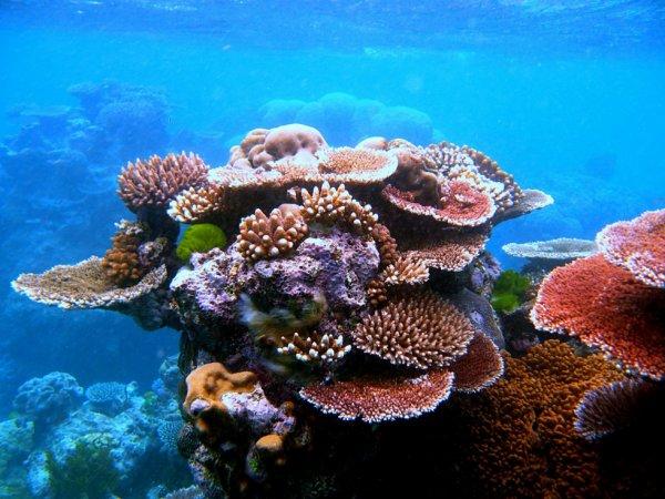 ➤La Grande Barrière De Corail