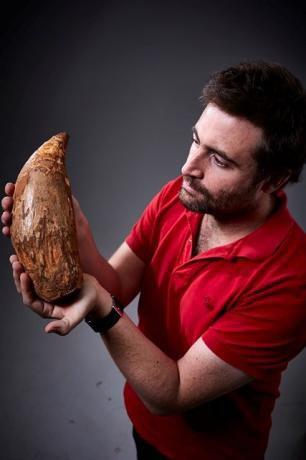 #Actu : Découverte d'une dent de cachalot géant de cinq millions d'années
