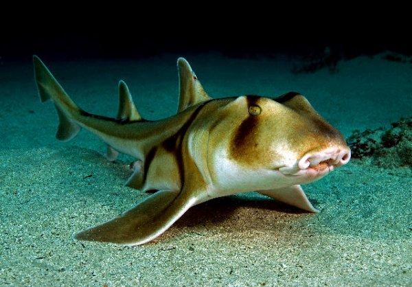 ► Le Requin De Port Jackson #Summer Time 2
