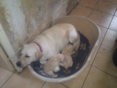 dolly avec ses petits