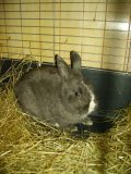 Photo de 1-lapin-dans-1-chateau