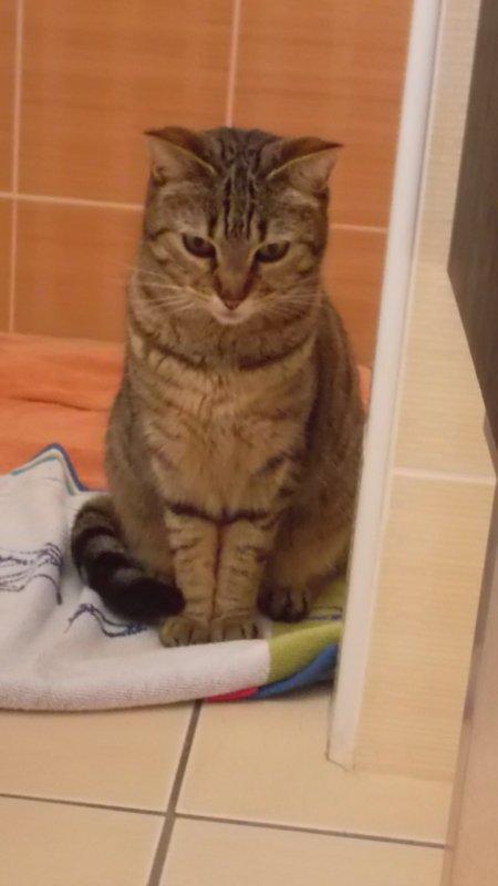Je vais vous présentez mon chat :