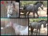 Voilà un montage de Vroum, un poney que j'adore aussi ;)