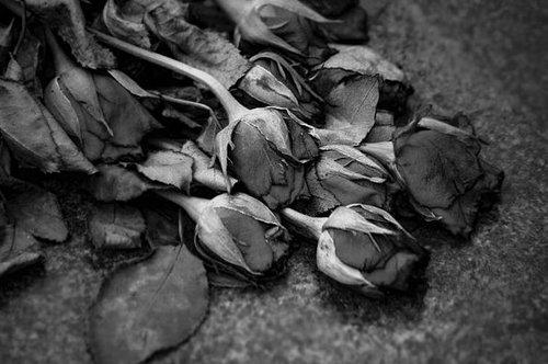 La vie et la mort coexistent en un équilibre incertain.
