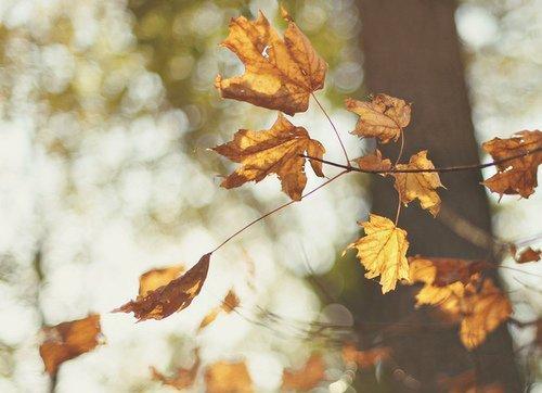 Le bonheurpeut être trouvé, même dans les momentsles plus sombres, si seulement on se rappelle d'allumerla lumière.