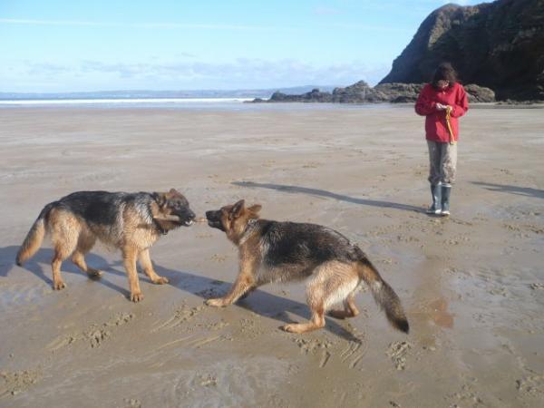 Daïka sur la plage, heureuse
