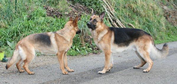 Daïka et Eïdhen ♥