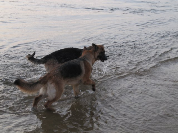 Eïdhen adore l'eau ! Daïka euh... Pas trop :)