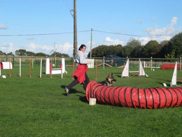 Ghelwyn en agility !
