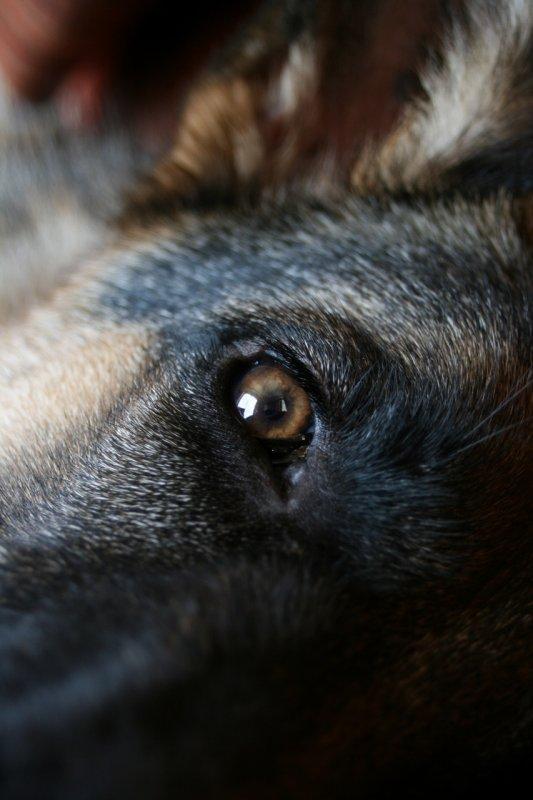 Dans le regard d'un chien ... Ghelwyn ♥