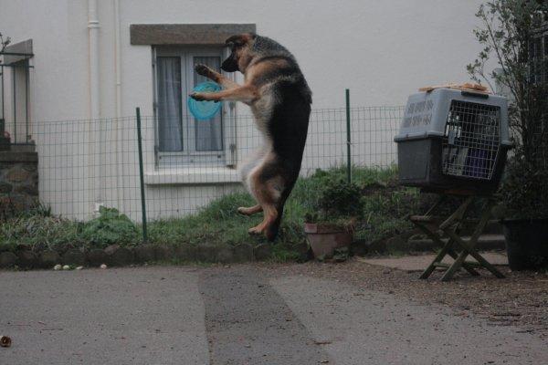 Les chiens au Frisbee !